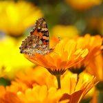 Een sfeervolle tuin met deze 4 tips